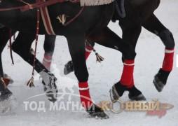 """""""Москвагийн өвөл -2013"""" Гурвалсан морин чарганы аварга шалгаруулах тэмцээн"""