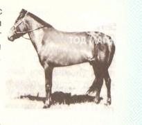Ногоон морь уягдаж байгаа нь 1981 он
