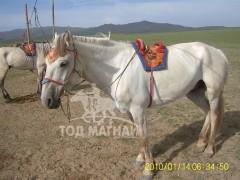 2010 онд Алтайн даншигт ирсэн зураг