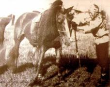 Нялга сумын уугуул Даваанэрэнгийн хүрэн халзан азарга 1952, 1955, 1959, 1961 оны улсын наадамд түрүүлж,