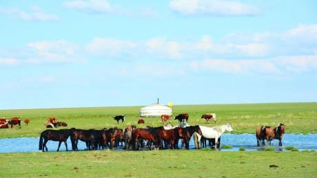 Мал эмнэлгийн ухааны дэд доктор Б.Пүрэвцэрэн: Монгол орны хувьд адууны 5-6 төрлийн вирусийн өвчин тохиолддог