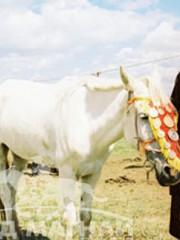 Монгол улсын алдарт уяач Лхагва-Очир